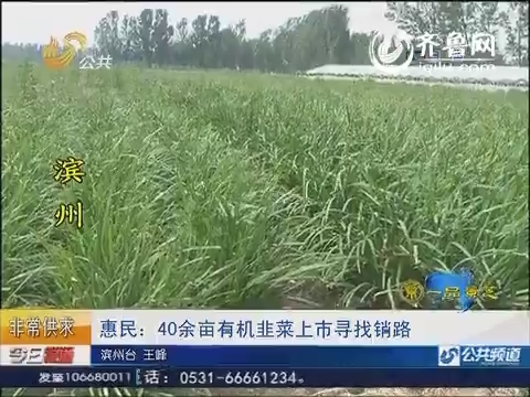 惠民:40余亩有机韭菜上市寻找销路