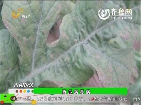 农科直播间20140513:蔬菜专家刘春香