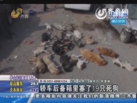 德州:轿车后备箱里塞了19只死狗