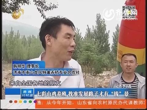 """济南:七彩山鸡养殖 找准发展路子才有""""钱""""景"""
