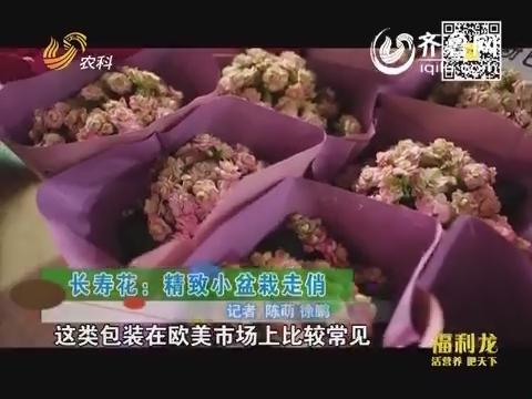 乡村季风海外版:长寿花:精致小盆栽走俏