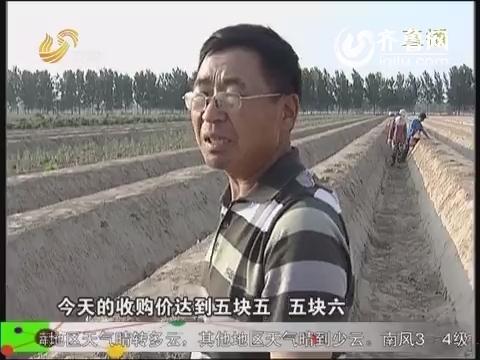 农科直播间20140529:小芦笋 大文章