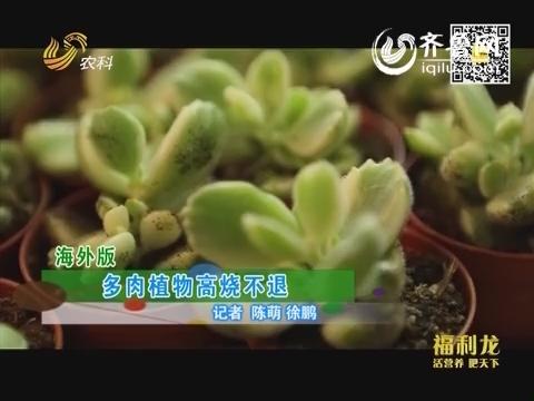 乡村季风:多肉植物高烧不退