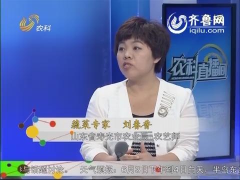 农科直播间20140603:蔬菜专家 刘春香