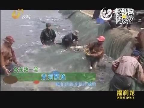 食在数一流:黄河鲤鱼