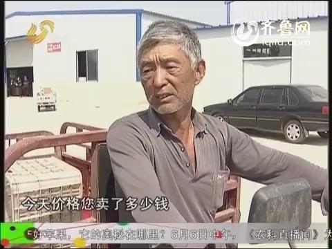 农科直播间20140605:玫瑰花