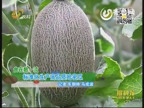 食在数一流:标准化生产高品质哈密瓜