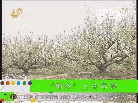 """农科直播间20140606:""""倒伞""""上的苹果"""