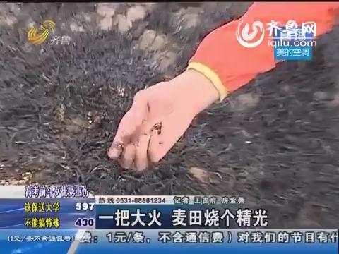 阳谷:一把大火 麦田烧个精光