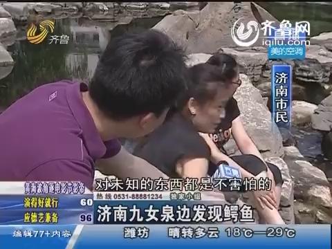 济南九女泉边发现鳄鱼
