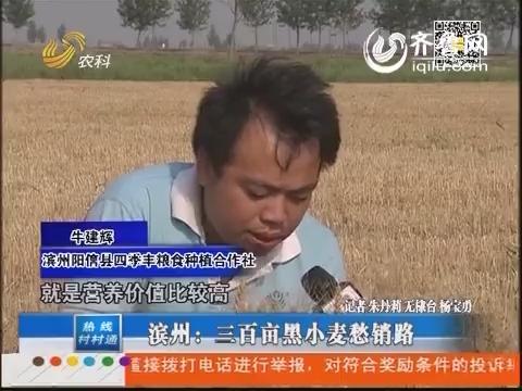 滨州:三百亩黑小麦愁销路