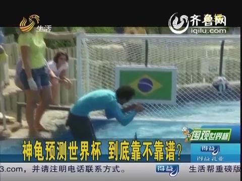 神龟预测世界杯 到底靠不靠谱?