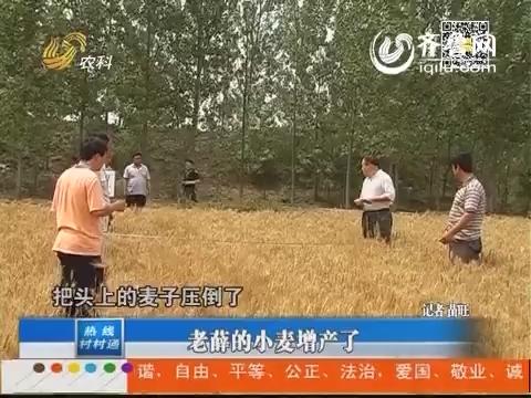 高唐:老薛的小麦增产了