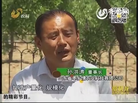 金领农民孙洪涛:半路出家来种枣