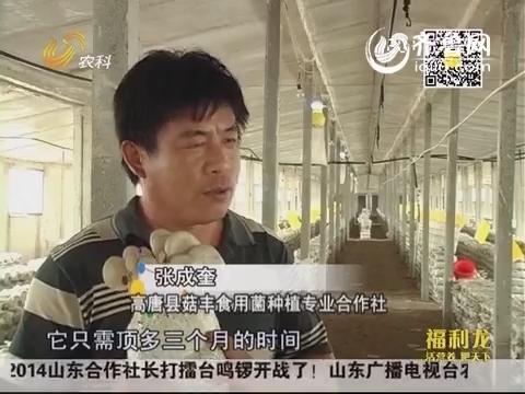 张成奎:夏季栽菇 仨月净入八十万