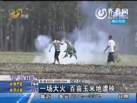 临邑:一场大火 百亩玉米地遭殃