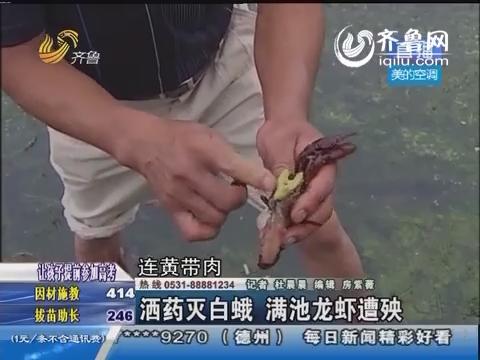 莱西:撒药灭白蛾 满池龙虾遭殃
