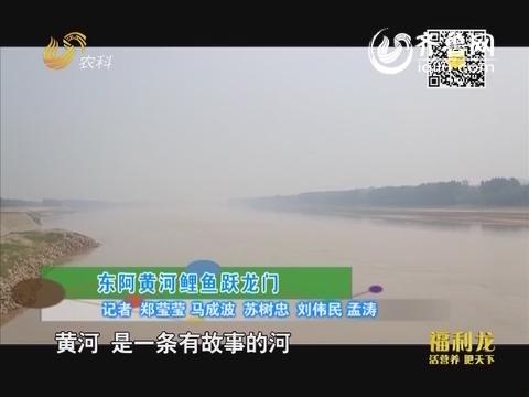 东阿黄河鲤鱼跃龙门