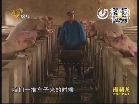 乡村传奇:凤凰山下养猪人