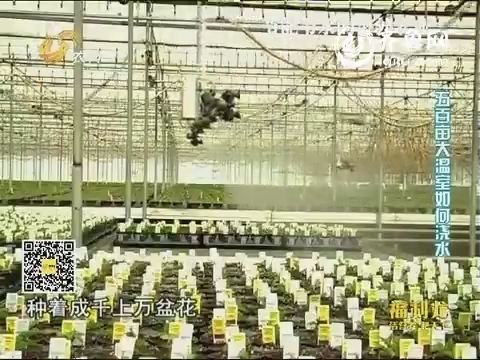 乡村季风海外版:美国:五百亩大温室如何浇水