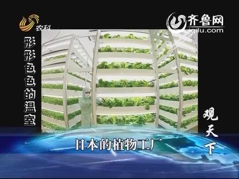 乡村季风:观天下 日本的植物工厂