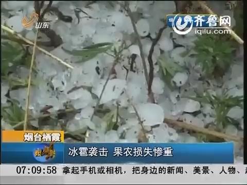 烟台栖霞:冰雹袭击 果农损失惨重