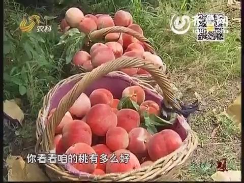 乡村新看点:他家的桃子为啥贵