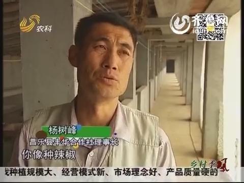 芭田杯2014山东合作社长打擂台:丰华合作社的秘密武器