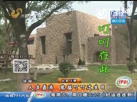 济南:人声鼎沸 熊猫叮叮过生日