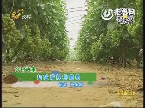 乡村故事:打破常规种葡萄