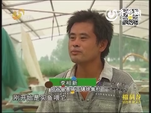 乡村传奇:80后小伙养泥鳅
