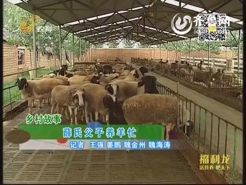 乡村故事:薛氏父子养羊忙