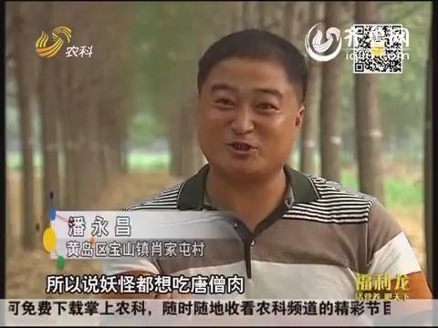 乡村传奇:潘永昌的金蝉梦