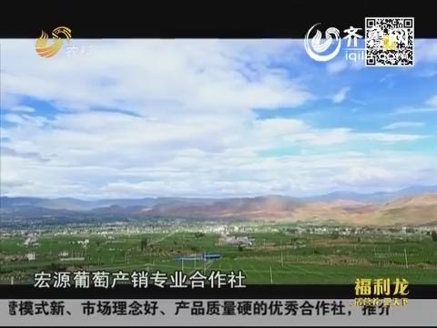 舌尖上的安全·放心农业中国行:又到红提成熟时