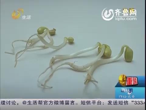 """【重磅】济宁:批发市场有""""问题豆芽"""" 豆芽根部不足十分之一"""