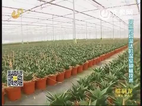 乡村季风:温室自动化