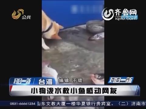 太有爱! 狗狗用鼻子撩水救鱼鼻子被摩擦受伤感动网友