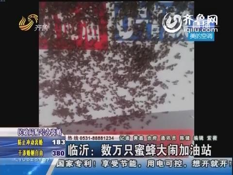 临沂:数万只蜜蜂大闹加油站 密密麻麻爬满加油机