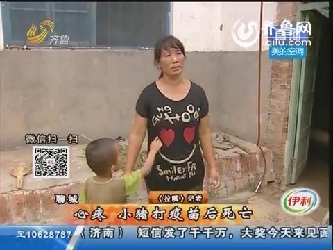 聊城:心疼!小猪打疫苗后死亡