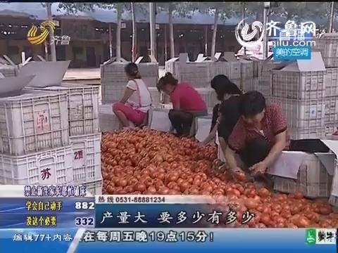 莘县:西红柿滞销 不少观众有意收购