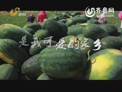 舌尖上的安全——格林凯尔放心农业中国行:沙漠戈壁里的绿色奇迹