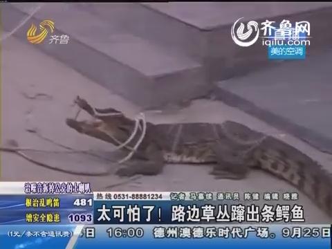 惊悚!临沂路边草丛蹿出条鳄鱼吓坏路人