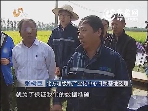 【新闻特写】百亩水稻攻关田:新纬度上的新挑战