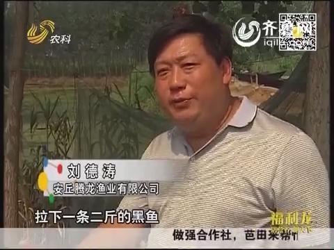 金领农民:养鱼大王的致富经