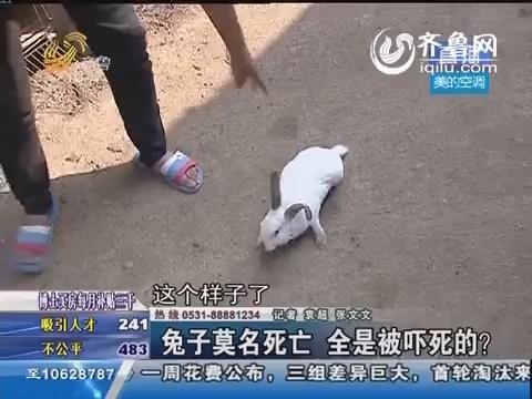 沂源县几百只兔子莫名死亡 竟是被吓死