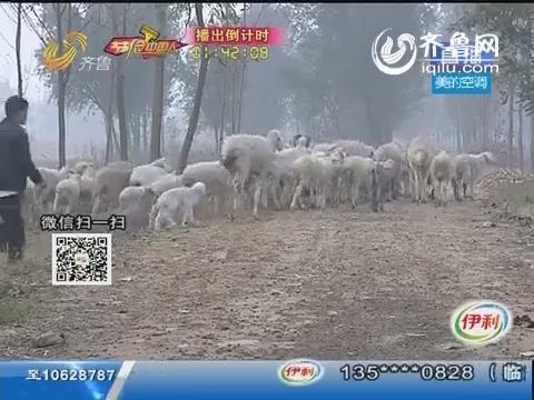 菏泽:大学毕业 荒滩上养鱼放羊