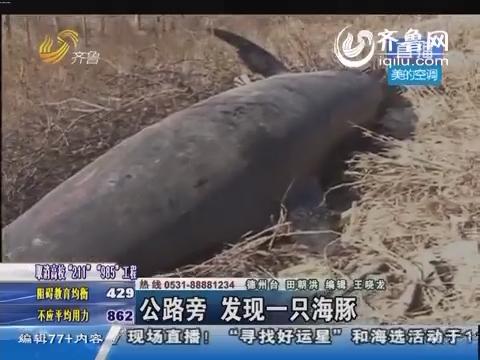 德州:公路旁发现海豚尸体 死亡原因成谜