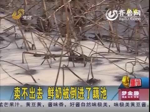 济南:卖不出去 鲜奶被倒进了藕池