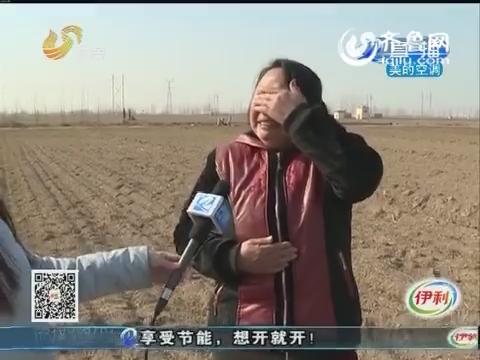 聊城:农妇家15亩麦苗全部死亡 原因仍在调查当中