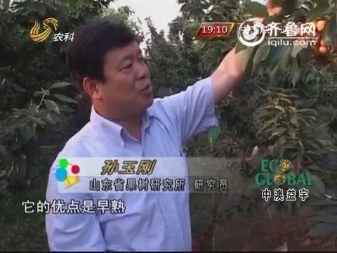 20150224《农科直播间》:孙玉刚的樱桃园